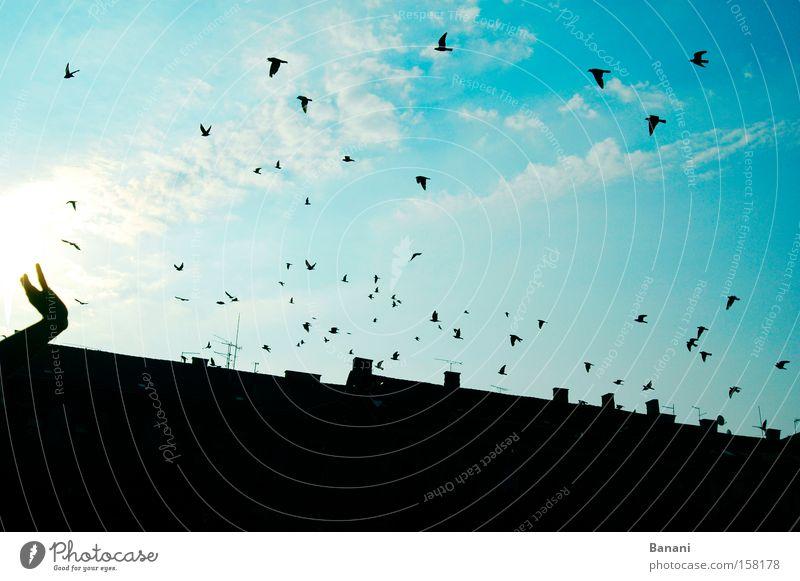 Freiheit Hand Himmel Sonne blau Freude Ferien & Urlaub & Reisen Haus Wolken Ferne Glück Vogel fliegen Luftverkehr Dach Reisefotografie Schwalben