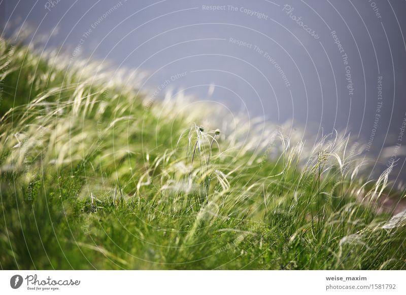 Nahaufnahmegras auf dem Riverback. Frühling. Makro Natur Pflanze grün Sommer Farbe Blume Blatt Blüte Wiese Gras Wachstum frisch Wind Schönes Wetter