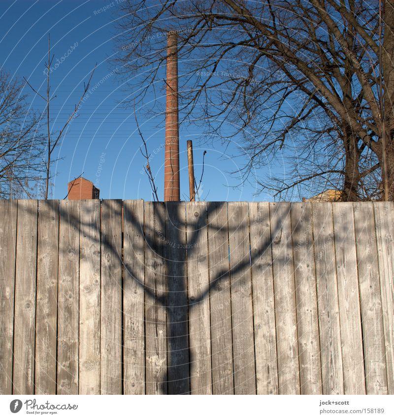 halb Schatten und halb Schornstein Wolkenloser Himmel Winter Baum Ast Lichtenberg Industrieanlage Ruine Architektur Holzzaun Linie außergewöhnlich Zusammensein