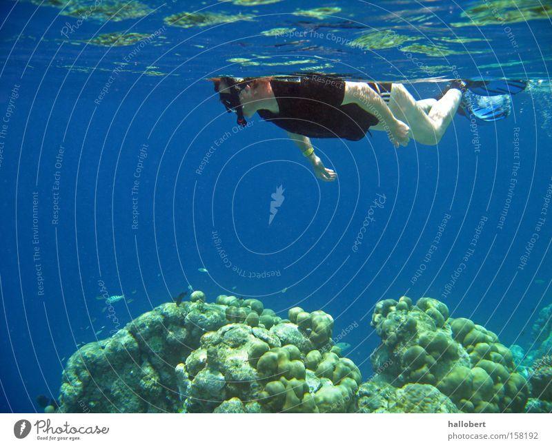 Malediven Water 20 Wasser Meer Unterwasseraufnahme tauchen Riff Schnorcheln