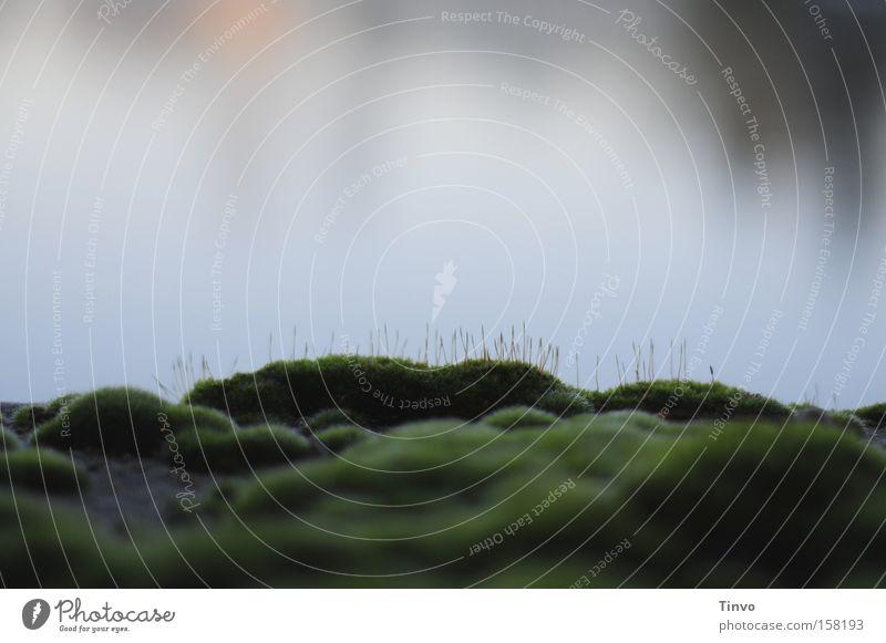 mossy island dunkel See Insel weich Moos sanft Abenddämmerung Miniatur bewachsen
