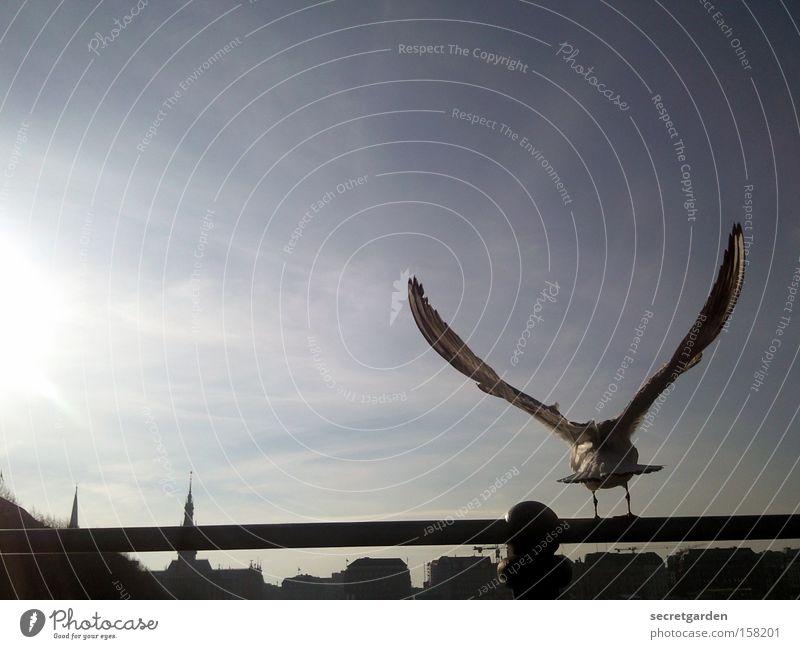 keine alsterschleiche blau Sonne Winter schwarz kalt Vogel Horizont Flügel unten Schönes Wetter Möwe Momentaufnahme Stab perfekt flattern Alster