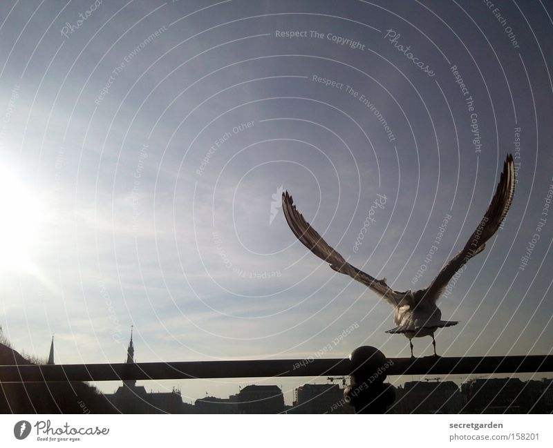 keine alsterschleiche Möwe Alster Stab Silhouette Sonne Horizont flattern kalt Winter unten blau schwarz Gegenlicht Vogel Schönes Wetter perfekt Flügel