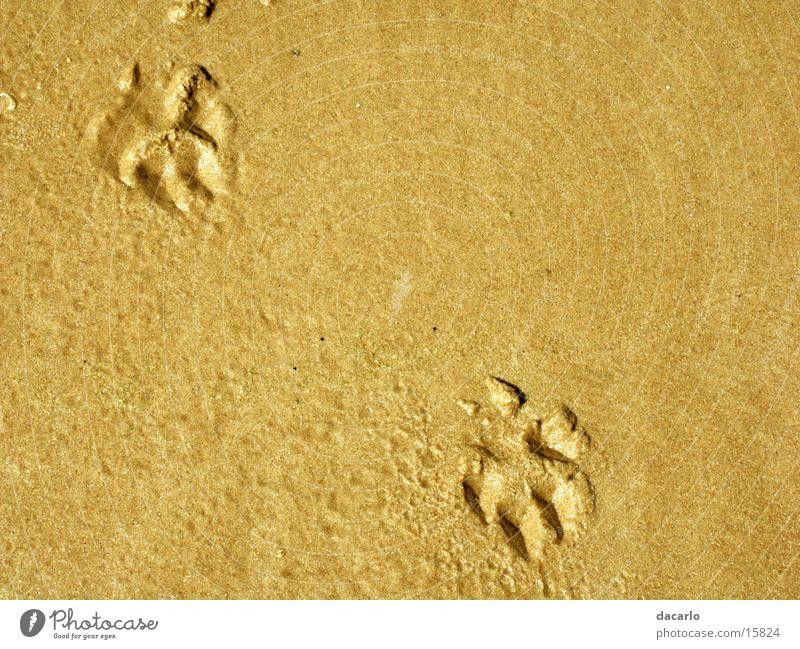 Sandspuren Strand Sand Spuren