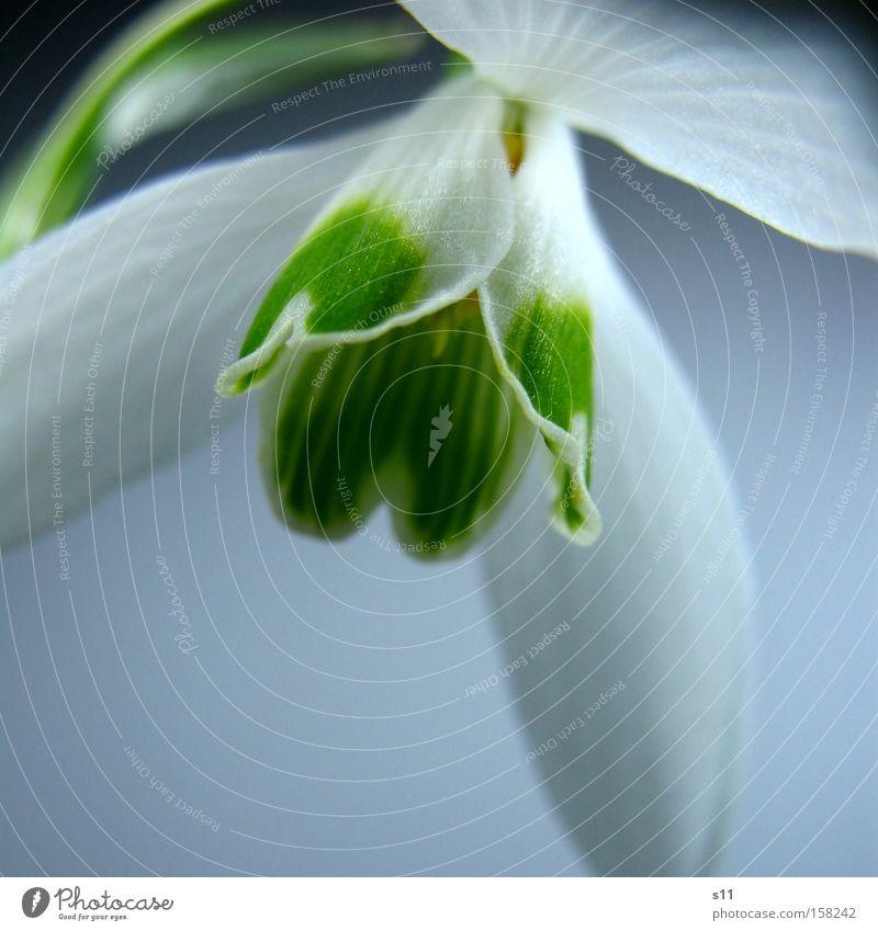Hope For Spring II Blume Schnee Blüte Frühling Park Herz Dekoration & Verzierung zart Jahreszeiten aufwachen Schneeglöckchen Makroaufnahme