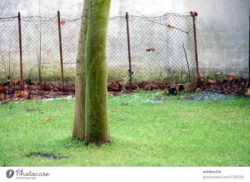 Tuschkastengarten Wiese Rasen Sportrasen Baum Baumstamm Birnbaum Wand Mauer Zaun Maschendrahtzaun Frühling Schrebergarten Park laubenpieper akazienhof