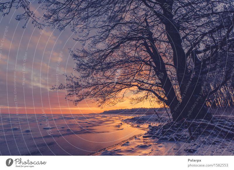 Baumschattenbild an einem gefrorenen Seeufer Himmel Natur Pflanze schön weiß Sonne Meer Landschaft rot Wolken Winter Strand dunkel Umwelt gelb