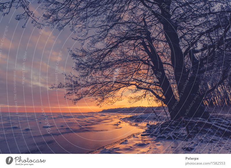 Baumschattenbild an einem gefrorenen Seeufer schön Sonne Strand Meer Winter Schnee Umwelt Natur Landschaft Pflanze Himmel Wolken Küste Fluss frieren dunkel hell