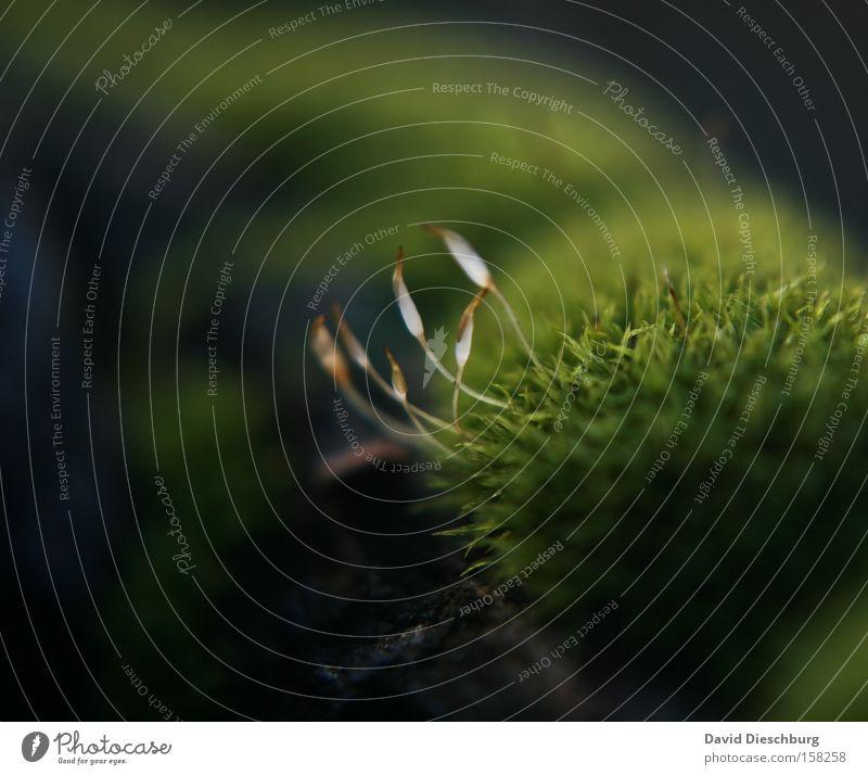 6 Freunde Natur weiß grün Pflanze Sommer schwarz dunkel Wiese Herbst Gras Frühling hell Park braun Wachstum Boden