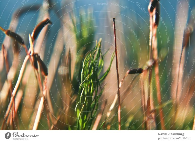 Wiese der Farben Natur Pflanze Gras Frühling Stengel Blütenknospen Blattknospe