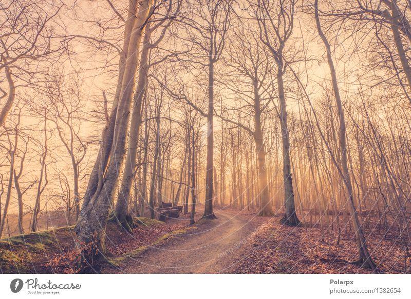 Sonnenaufgang in einem nebligen Wald schön Sommer Umwelt Natur Landschaft Herbst Nebel Baum Blatt Park Straße hell grün Waldlichtung magisch Märchen Licht