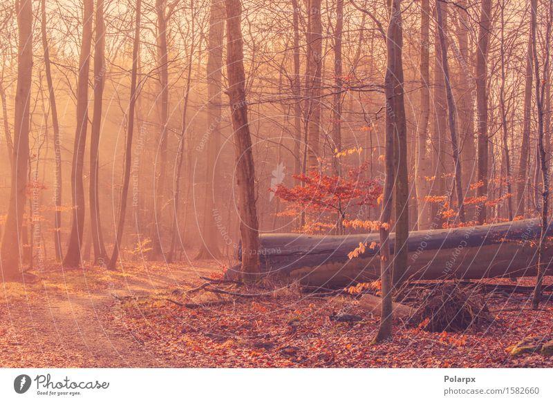 Gefallener Baum in einem nebelhaften Sonnenaufgang schön Sommer Umwelt Natur Landschaft Herbst Nebel Blatt Park Wald Straße hell grün Waldlichtung magisch