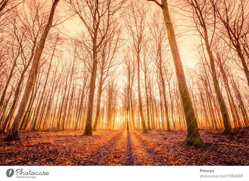 Die Sonne geht in einem Wald auf schön Sommer Umwelt Natur Landschaft Herbst Nebel Baum Blatt Park Straße hell grün Waldlichtung magisch Märchen Licht fallen