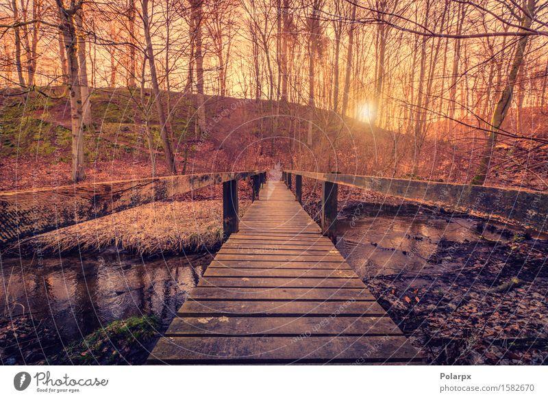 Himmel Natur Pflanze schön Sommer Farbe Baum Landschaft Wald Umwelt gelb Straße Architektur Herbst Holz See