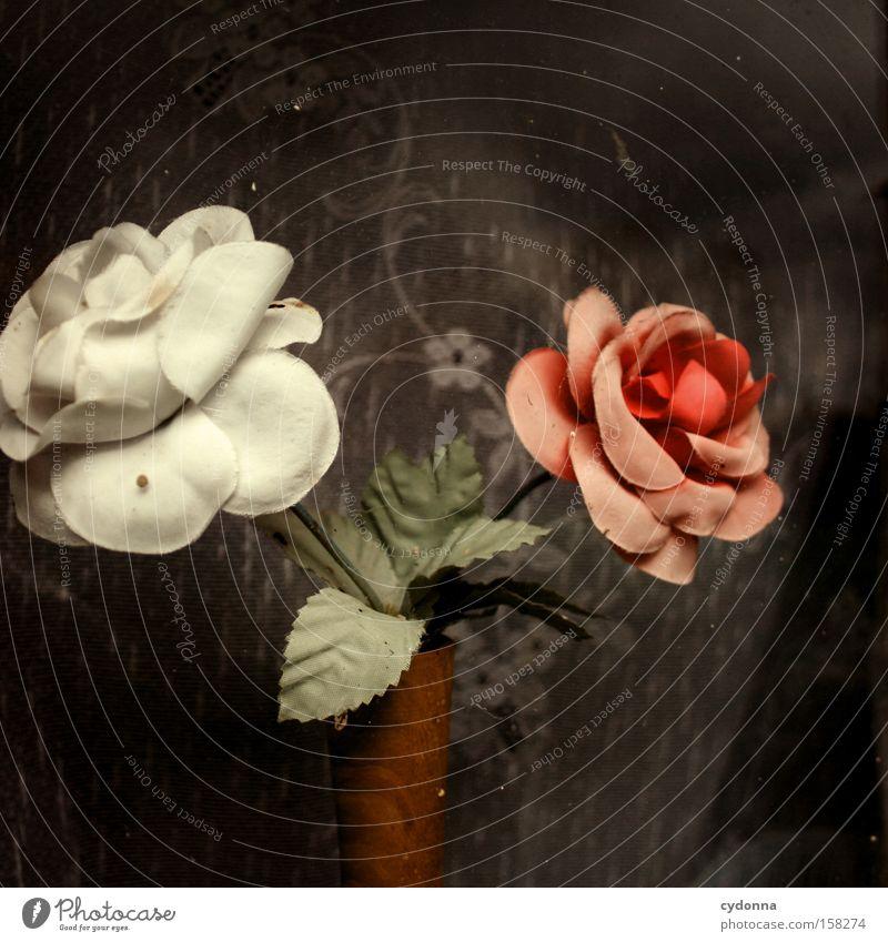 Fensterschmuck Blume Fenster Zeit Romantik Kitsch Dekoration & Verzierung Vergänglichkeit Kunststoff Vergangenheit Nostalgie Gardine verschönern stagnierend Geschmackssinn Ostalgie Kunstblume