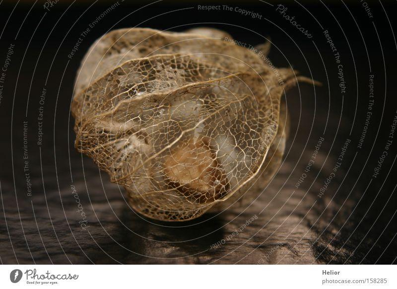 Netzwerk schwarz dunkel Frucht Hoffnung Trauer Klarheit Vergänglichkeit Verzweiflung durchsichtig fein zerbrechlich Skelett Hülle Wunder Gerüst