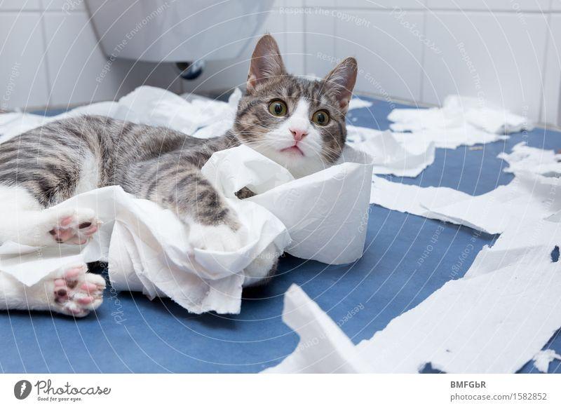 Morgentoilette Katze Tier Freude Tierjunges Innenarchitektur lustig Spielen Wohnung liegen wild Häusliches Leben Dekoration & Verzierung Fröhlichkeit niedlich