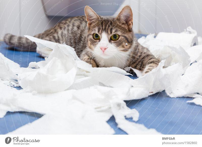 Lets have fun... Wohnung Raum Bad Toilette Tier Haustier Katze 1 Toilettenpapier liegen Spielen toben Coolness Fröhlichkeit Neugier niedlich verrückt blau weiß