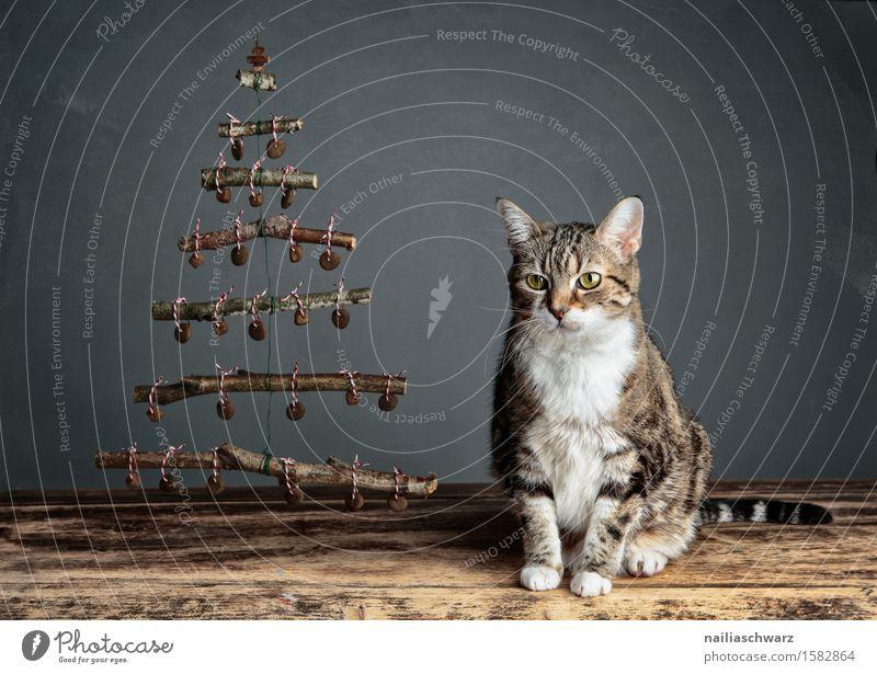 Katzenweihnacht blau schön Tier ruhig natürlich Holz Denken Feste & Feiern grau Zufriedenheit sitzen retro Fröhlichkeit warten beobachten