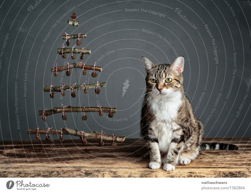 Katzenweihnacht Katze blau schön Tier ruhig natürlich Holz Denken Feste & Feiern grau Zufriedenheit sitzen retro Fröhlichkeit warten beobachten