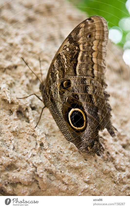nachtfalter? Baum Flügel Insekt zart Schmetterling Lebewesen Fühler Baumrinde