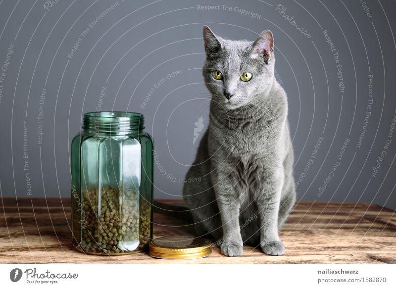 Katzenfutter Futter Ernährung Glas Tier Haustier 1 Dose Container Holz blau grau Zufriedenheit Tierliebe Neugier Interesse Hoffnung Erwartung schön Hauskatze