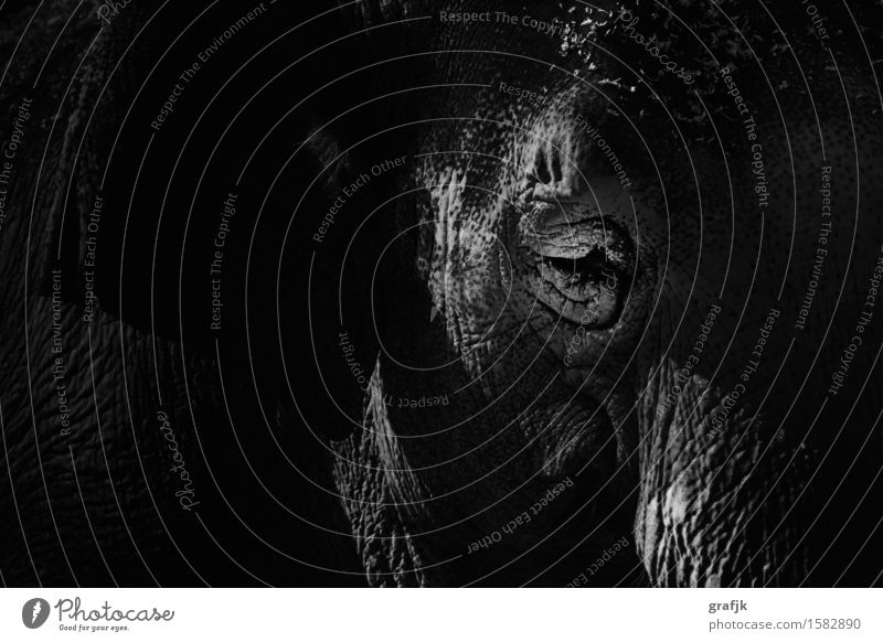 Eye of the elephant schön weiß Tier schwarz Auge außergewöhnlich Stimmung elegant Kraft Wildtier ästhetisch Abenteuer Afrika exotisch Tiergesicht Zoo
