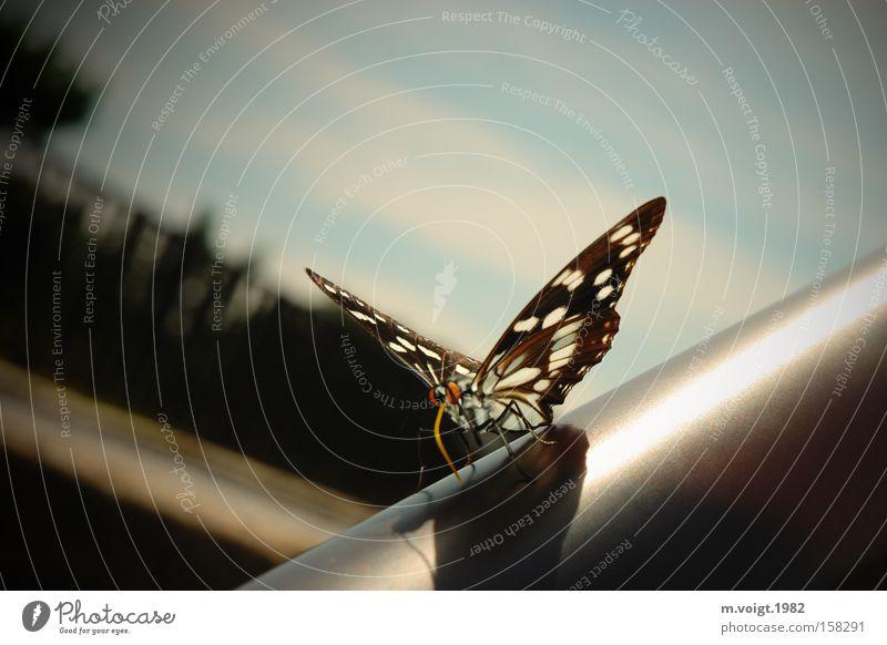 Tagfalter Natur schön Sonne Sommer Asien Flügel Insekt Schmetterling Sonnenbad Fühler Rüssel