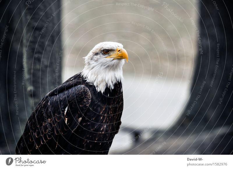 Weißkopfseeadler II Natur schön Tier Winter Wald Umwelt Herbst Frühling Auge außergewöhnlich Vogel Felsen Luft elegant Wildtier gefährlich