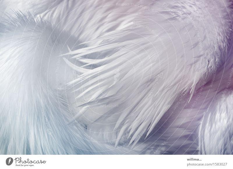 white balance Tier Feder gefiedert Flaum Pelikan weiß ästhetisch exotisch zart hell leicht Pastellton graphisch Ruderfüßer Detailaufnahme Strukturen & Formen