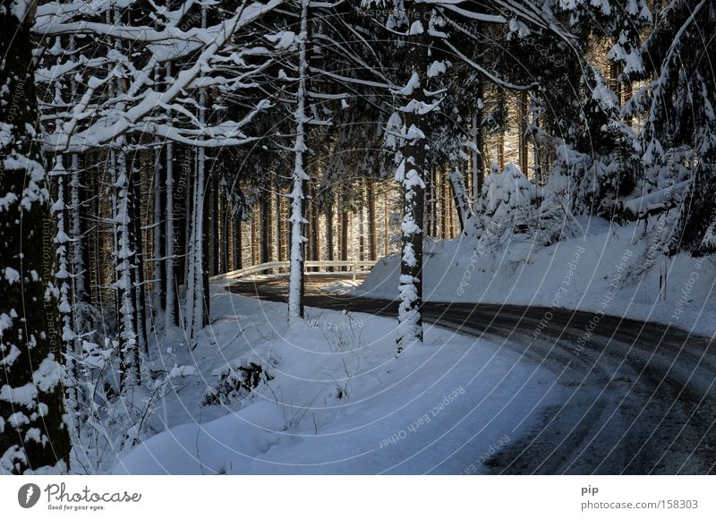 S geht ins licht Baum Winter Ferien & Urlaub & Reisen Straße Wald dunkel kalt Schnee Wege & Pfade Wärme hell gefährlich Frost Ziel fantastisch Tanne