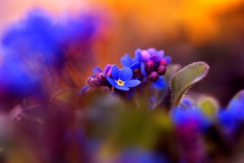 Frühling Natur Pflanze blau schön Sommer Blume Umwelt Blüte Garten Stimmung Wachstum ästhetisch Fröhlichkeit Blühend Lebensfreude