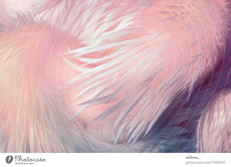 rosé balance Tier hell rosa ästhetisch Feder weich zart exotisch leicht Hals Pastellton gefiedert Flaum Pelikan