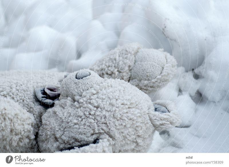Der Eisbär Einsamkeit kalt Schnee Vergänglichkeit Spielzeug Kindheit Stoff frieren Schwäche vergessen Teddybär Stofftiere Plüsch erfrieren