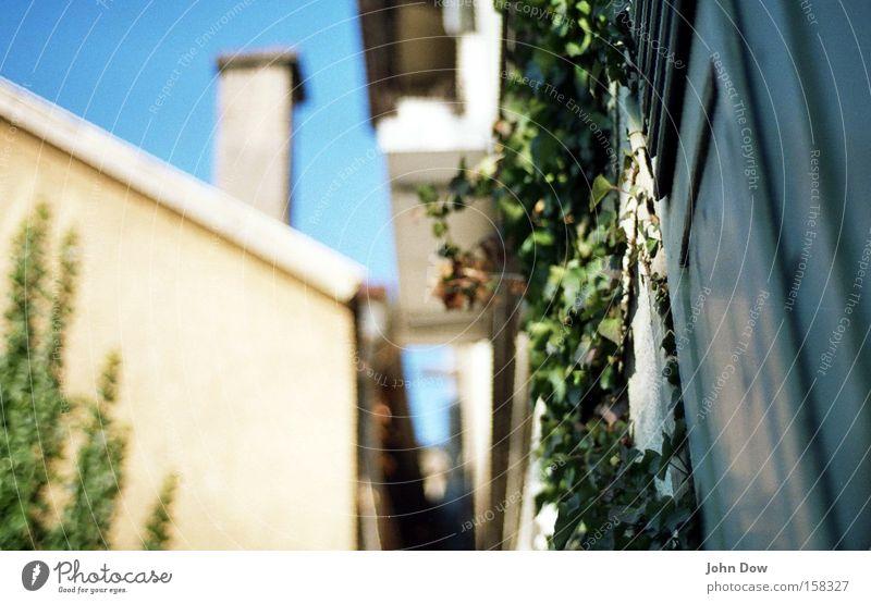 Eppich im Hinterhof grün Pflanze ruhig Einsamkeit Fenster Garten Park Wohnung Fassade Wachstum Bauernhof festhalten verfallen Jahreszeiten Schönes Wetter