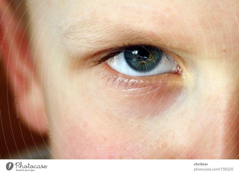 Ick wull ju wat... Auge Kind Gesicht Porträt drohen böse Wut Junge Blick Ärger Makroaufnahme Nahaufnahme chribier Jugendliche