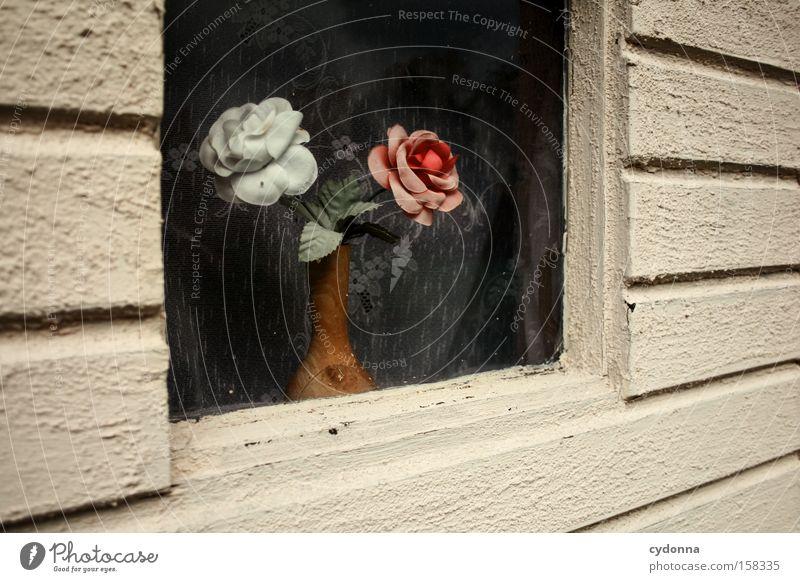In meinem kleinen Fensterchen Blume Fenster Zeit Romantik Kitsch Dekoration & Verzierung Vergänglichkeit Kunststoff Vergangenheit Nostalgie Gardine verschönern stagnierend Geschmackssinn Ostalgie Kunstblume