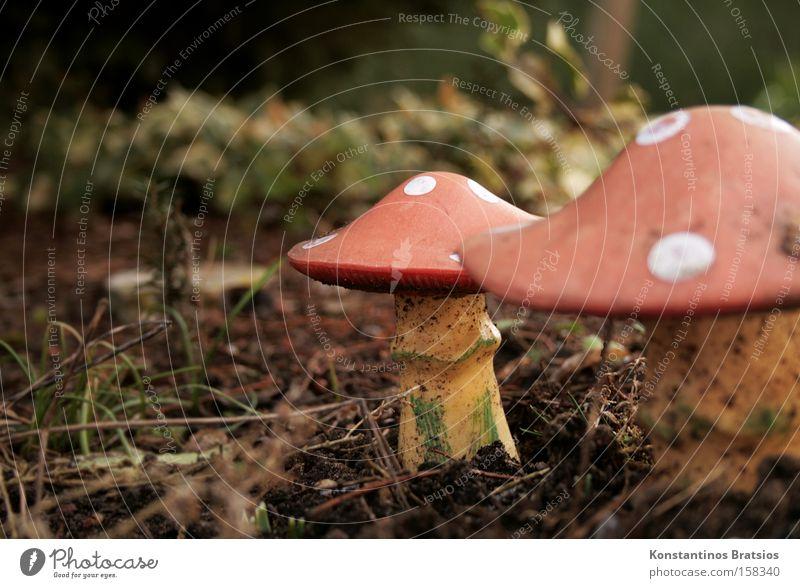 Winterharte Pilze Farbfoto Außenaufnahme Tag Unschärfe Glück Garten Dekoration & Verzierung Natur Pflanze Park Wald Hut Kunststoff unten rot weiß gefährlich