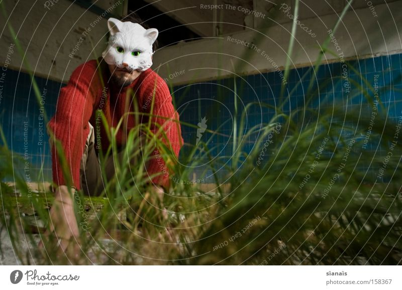 Katzengras sitzen Rasen Fabrik Maske Fliesen u. Kacheln Karneval Haustier Surrealismus Hauskatze Karnevalskostüm verkleiden verkatert
