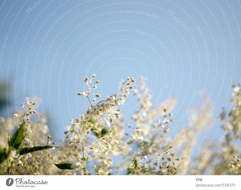 Windfänger Himmel Natur blau schön Pflanze Sommer Blume Blatt Frühling Blüte Garten Luft Stimmung Wachstum weich