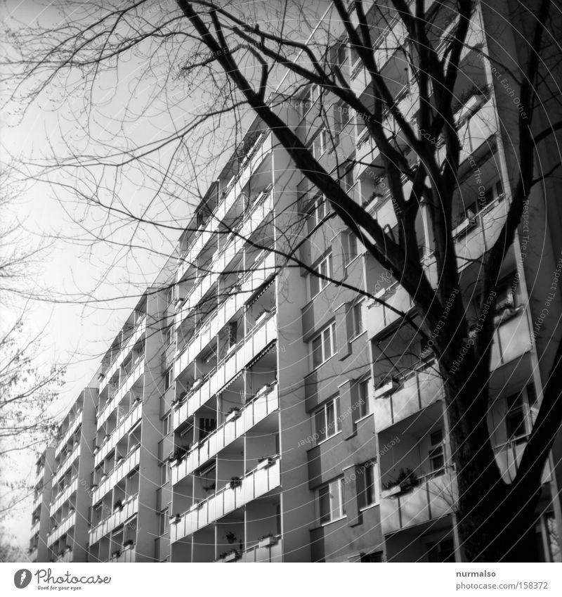 Tristes oder Nobless? Haus Hochhaus Plattenbau DDR Balkon einheitlich Wohnanlage Wohnhochhaus Zugabteil Wohnheim Potsdam Ameise Berlin Schwarzweißfoto Wohnlage