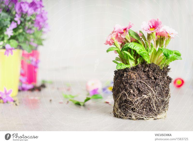 Topf Blume ohne Topf für Anpflanzen Stil Leben Freizeit & Hobby Sommer Garten Dekoration & Verzierung Tisch Natur Pflanze Blatt Blüte Blühend Design
