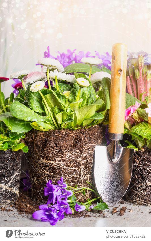 Gartenschaufel und Topfblumen Natur Pflanze Sommer Blume Blatt Blüte Stil Design Freizeit & Hobby Dekoration & Verzierung Tisch Blühend Gartenarbeit Wurzel