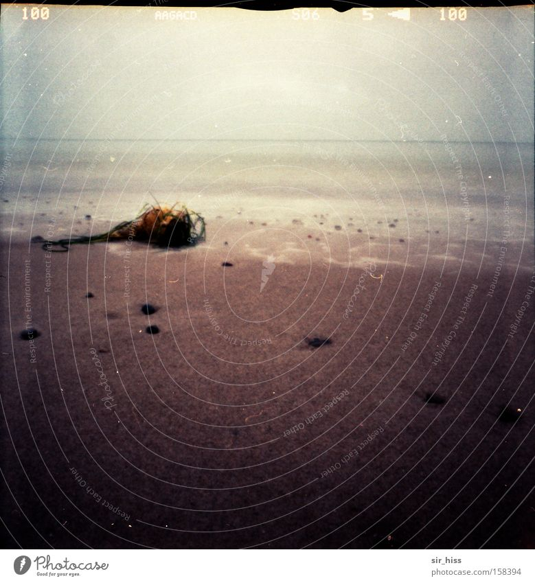 Strandgut Wasser Meer Winter Strand Sand Wellen Lomografie Ostsee Muschel Darß Algen Strandgut