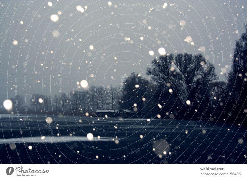 Winter Eis Schneefall See Baum kalt Schneeflocke Bootsschuppen Feisnecksee Bootshaus Lagerschuppen dunkel Winterstimmung laublos Scheune