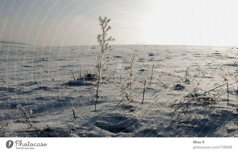 Eiswüste Winter kalt Schnee Gras Russland trist Frost Wüste gefroren frieren Ödland Sibirien Eisblumen karg