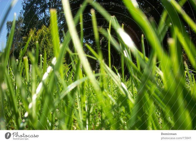 Sicht einer Ameise Sommer Tier Gras hell