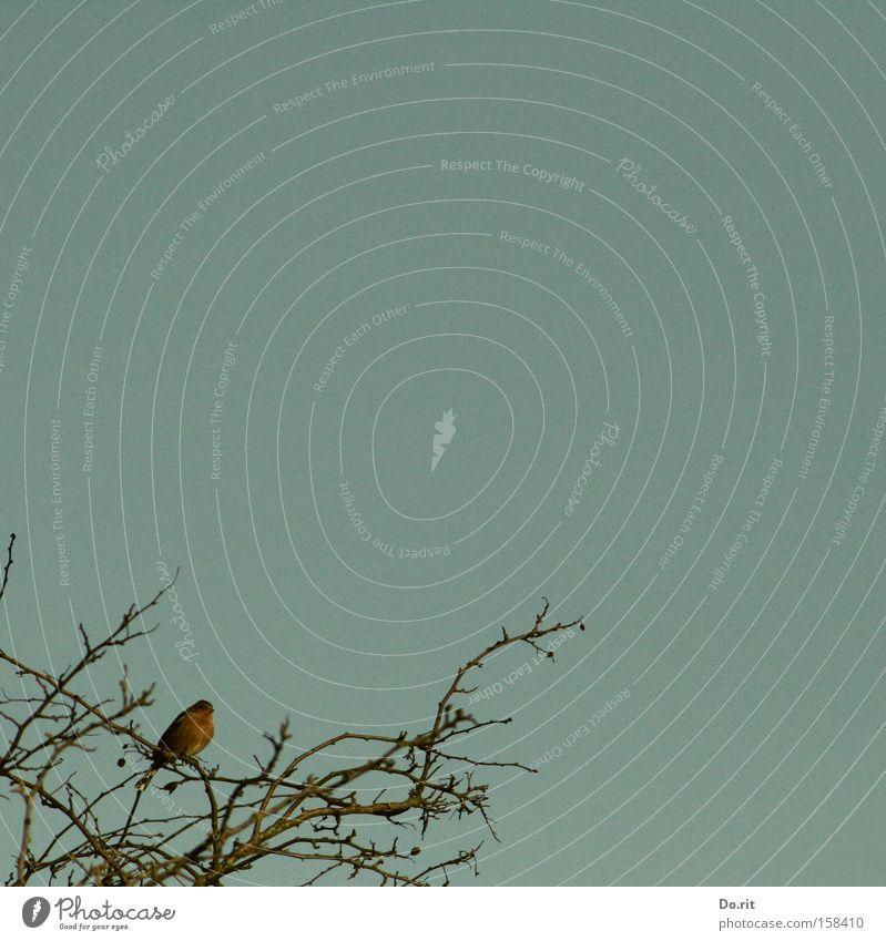 Mellas secret Baum blau Winter dunkel Traurigkeit Vogel Trauer Ast Verzweiflung Zweig Lichtblick Wintermorgen