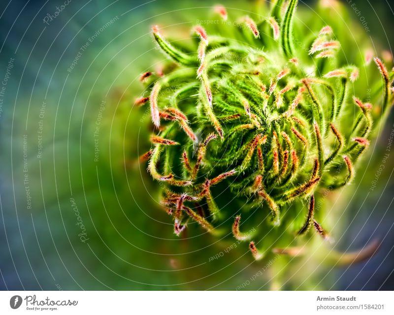 Irgendwie organisch Design exotisch Sommer Garten Wissenschaften Natur Pflanze Frühling Park Wiese Wachstum ästhetisch außergewöhnlich frisch grün Gefühle