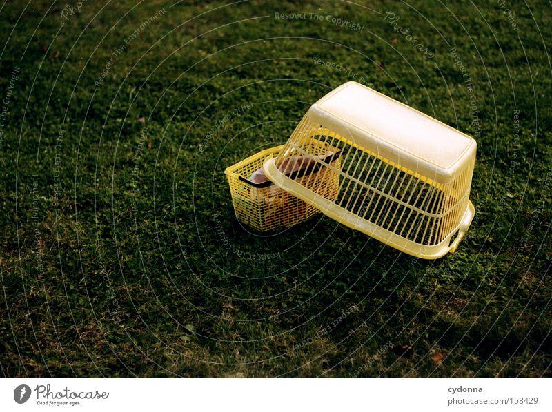 Lufttrocknen gelb Wiese Garten Park Arbeit & Erwerbstätigkeit Ordnung Sauberkeit Handwerk Wäsche Haushalt Korb fertig Klammer aufhängen Waschtag Pflicht